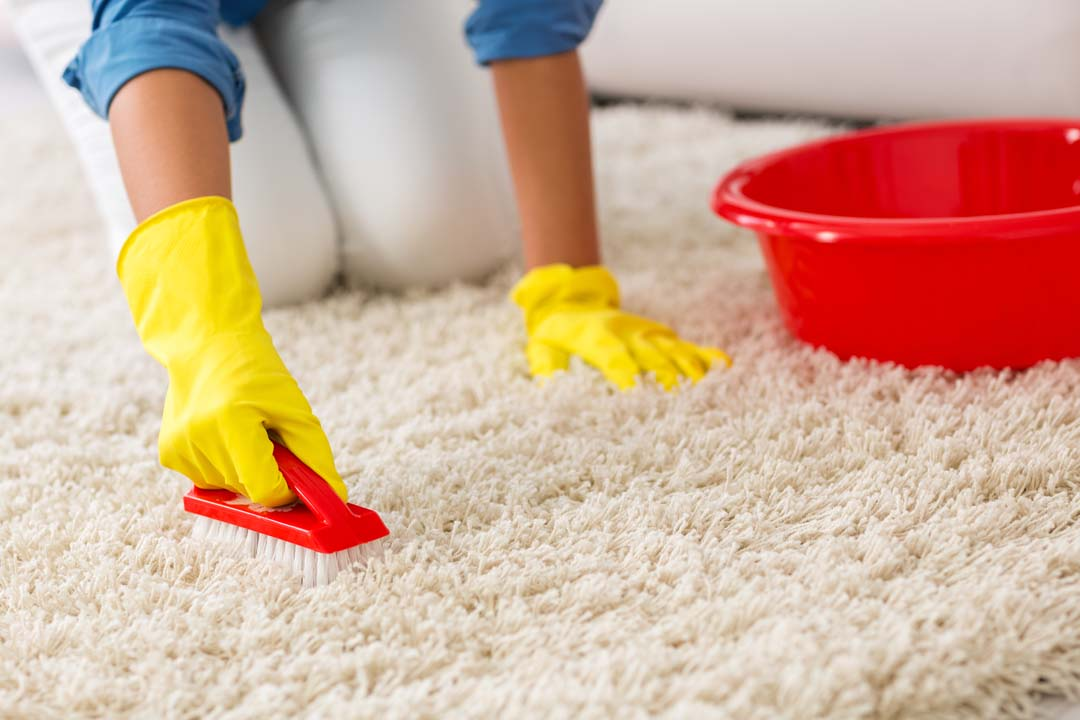 highlands ranch carpet cleaning