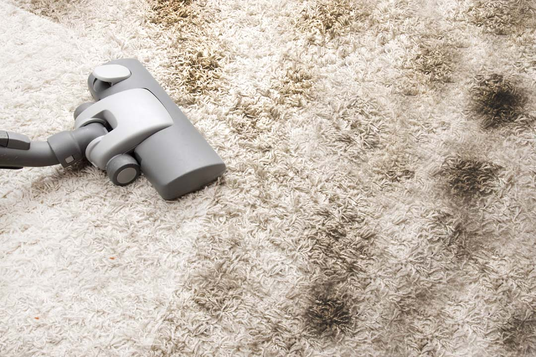 carpet cleaning lone tree co